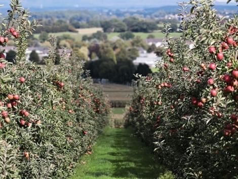 Kertészeti üzemek megújításának támogatása