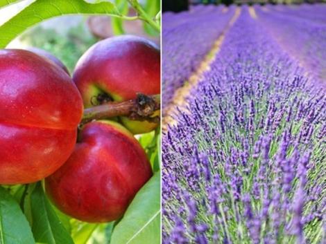 Kertészet – ültetvénytelepítés és gyógynövénytermesztés támogatása