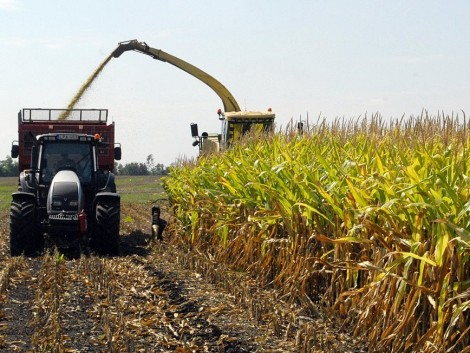 Növelje a takarmány minőségét! Termeljen 1% propilén-glikolt a kukoricaszilázsból