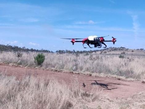 Drónokkal veszik fel a harcot a kiirthatatlan gyomnövények ellen