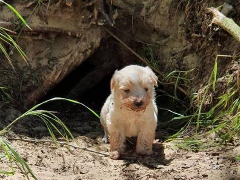 Rókalyukban élő kutyacsaládot találtak Bács-Kiskun megyében