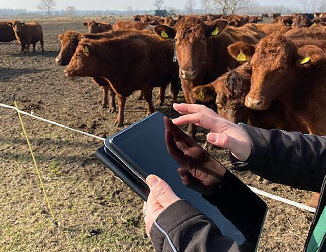 szarvasmarha telep digitális adatkezelés tablet