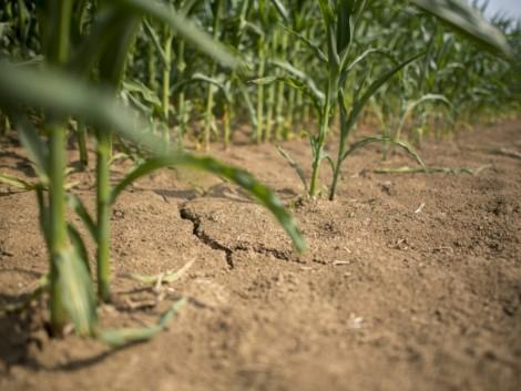 Súlyos károk a cseh mezőgazdaságban