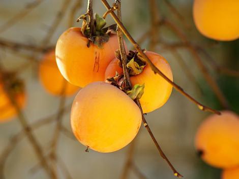 Meg fogsz lepődni! 4 egzotikus, de itthon is könnyen nevelhető gyümölcs