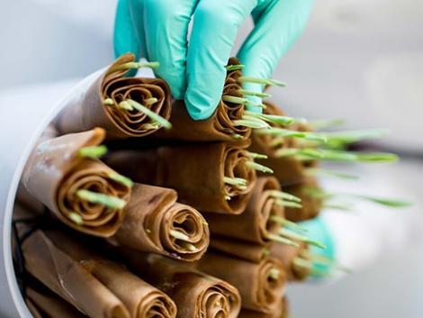 Együtt fejleszt precíziós növénynemesítési technológiát a Corteva és a Bejo