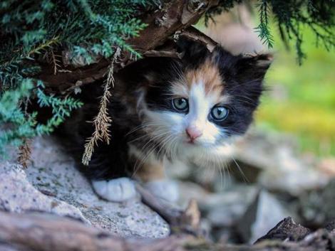 Elhagyatott madárfészekben élő macskacsaládot mentettek meg