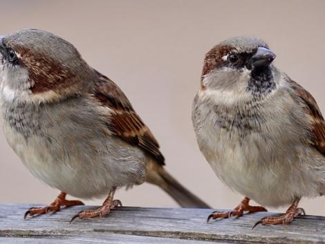 Negyedannyi madár él a Földön, mint ahogy eddig becsülték