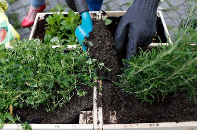 viráföld komposztálással