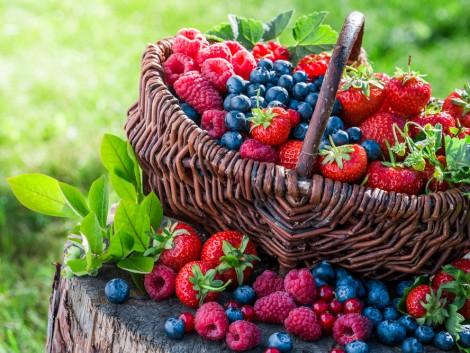 A legtöbb lengyel bogyós gyümölcs termésmennyisége csökkent