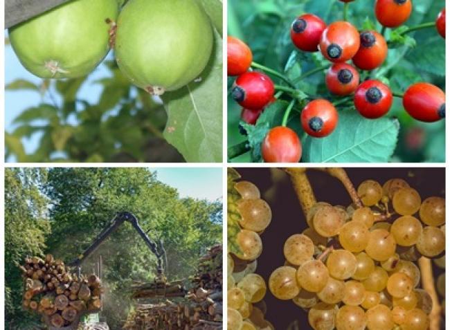 A gyümölcstermesztésben rejlő lehetőségek, új EU-s rendeletek, ismét újabb pályázatok