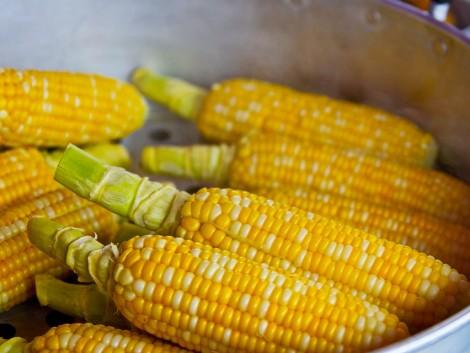 Kukorica Barométer – Mikor és hogyan érik a kukorica?