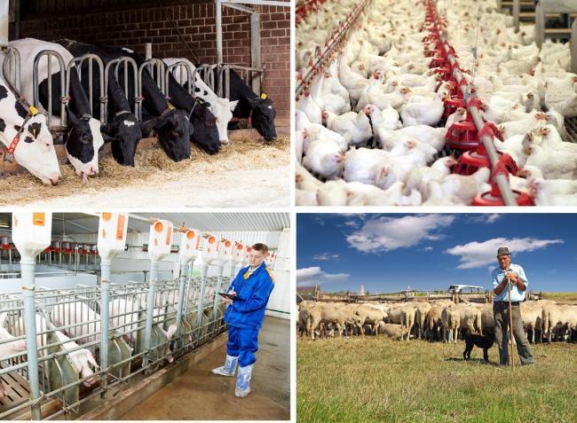 Megnyílt! Kisebb állattartó gazdaságok pályázata – épületre, eszközre, gépre, traktorra!