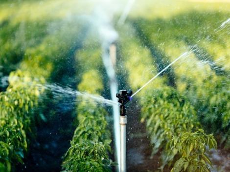 Így öntözd a zöldségeket! A jövedelmezőség és a termésbiztonság is ezen múlik
