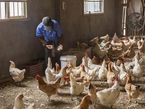 A világon most először fertőzött embert a madárinfluenza H10N3 változata