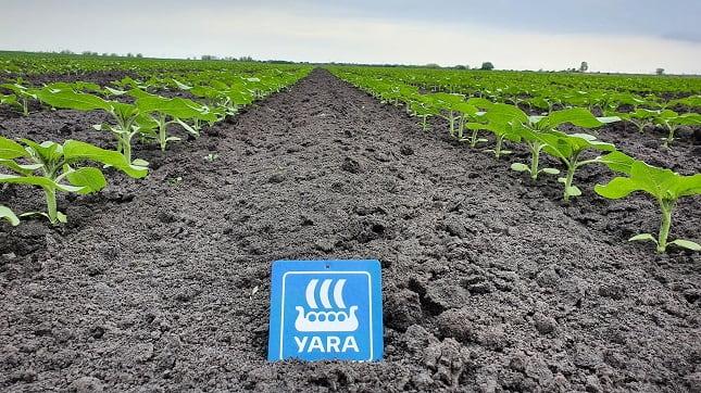 Yara növényvédelem napraforgóban