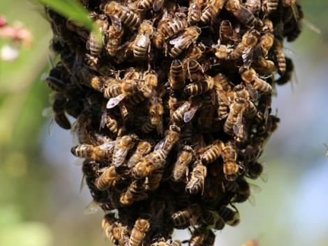 Méhek okoztak riadalmat a szombathelyi kórházban – videón a tűzoltók akciója