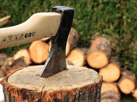 Sokkoló az illegális fakitermelés és -kereskedelem éves mérlege
