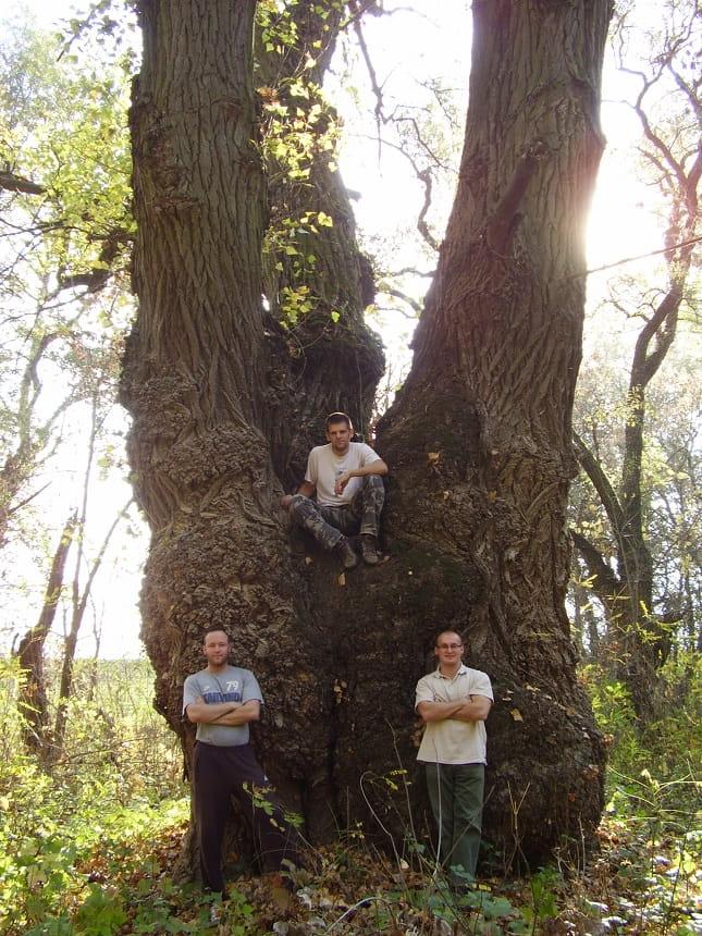 egészséges idős fa