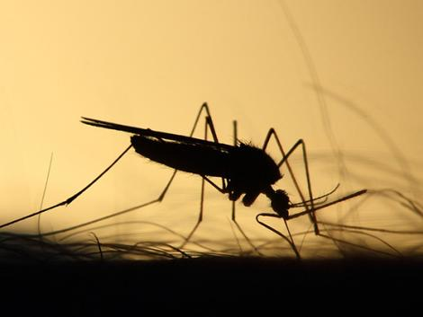 Katasztrófavédelem: itt folytatódik a szúnyogirtás