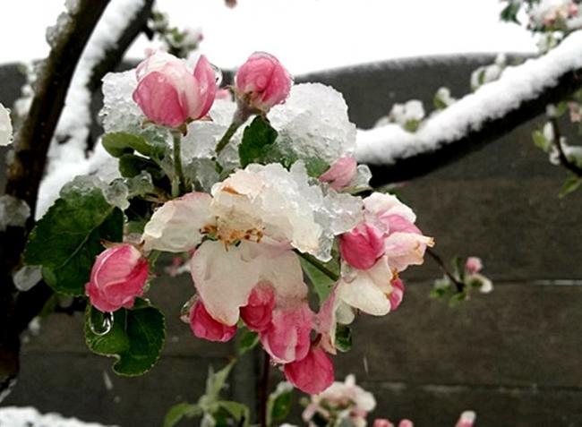 Több hidegrekord is megdőlt idén tavasszal: mínusz 11 fokot is mértek
