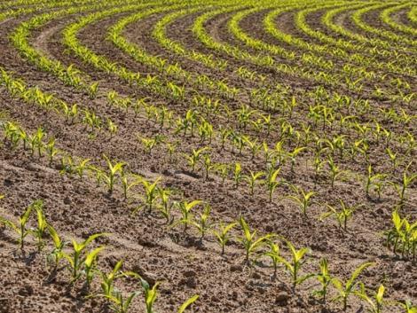 26 ezer gazdálkodónak kell pótolnia a hiányosságokat! Te köztük vagy?