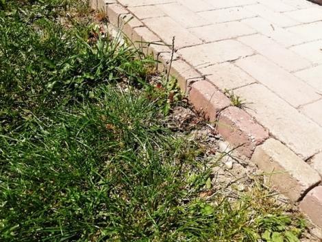 Otthonfelújítási támogatás: akár a kertre is költheted!