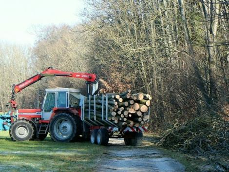 Egyre átláthatóbbá válik az erdőkezelés szabályozása – soroljuk a változásokat!