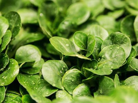 700 kiló zöldség lett az enyészeté