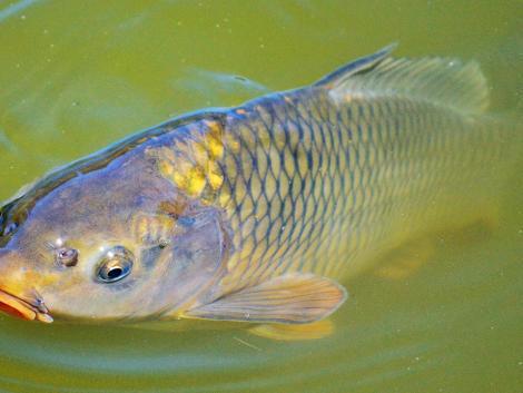 3 millió forint halgazdálkodási bírság jött össze idén tavasszal