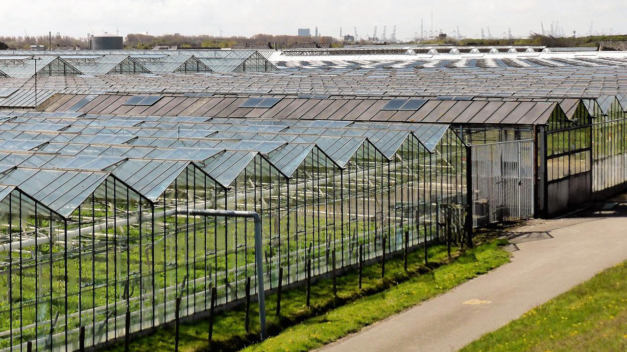 A földhővel az üvegházak is fűthetőek