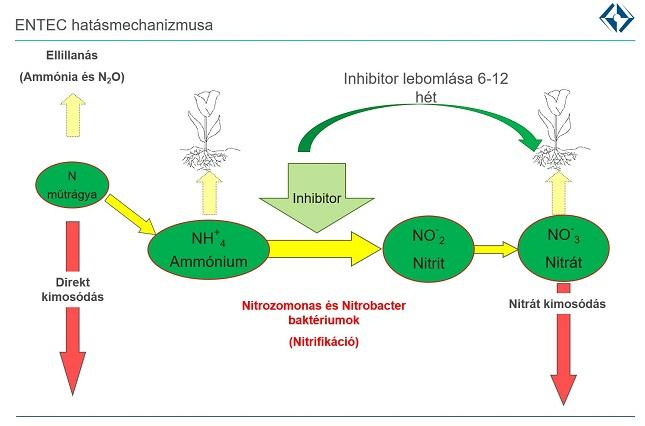 nitrogén műtrágya