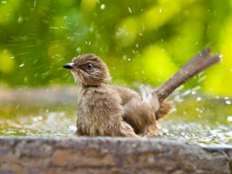 Nyáron se feledkezz meg a kert madarairól!