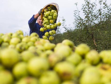 Nagy lehetőség a magyar almatermesztőknek – hatalmas alma logisztikai központ épül Szabolcsban