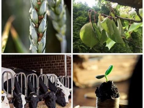 Óriási pályázati lehetőségek, rendkívüli pusztítás a gyümölcsfákon, a túlélésért küzd a kertészeti ágazat