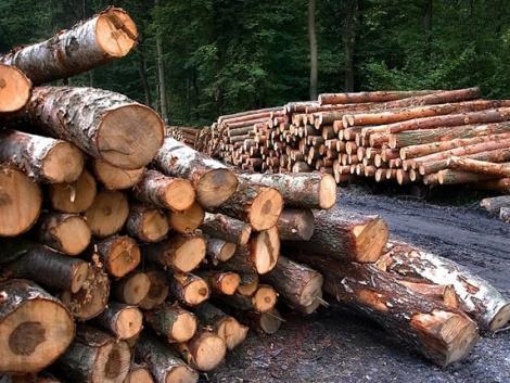 Közeleg a határidő – be kell jelenteni az erdőkárokat!