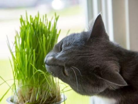 Így ne mérgezd meg a kiskedvencedet – kutyákra, macskákra ártalmas növények