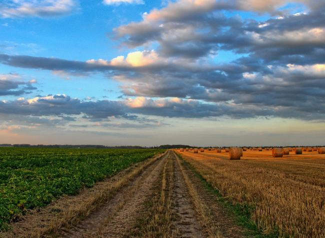 Egyre drágább a termőföld Magyarországon!
