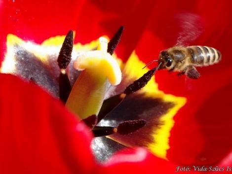 Barát vagy ellenség? Ezeket nem tudtad a méhekről és a darazsakról