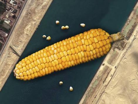 Meddig emelkedik a kukorica ára és mi lesz a búzával?