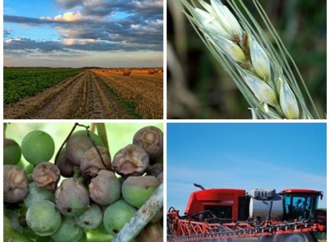 Dráguló termőföld, óriási levéltetű-kártétel, veszélyben a szőlő