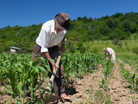 Mezőgazdaságban dolgozók, figyelem! Hőségriasztás lépett életbe!