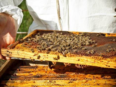 Indulnak a méhek Budapestre – Videó