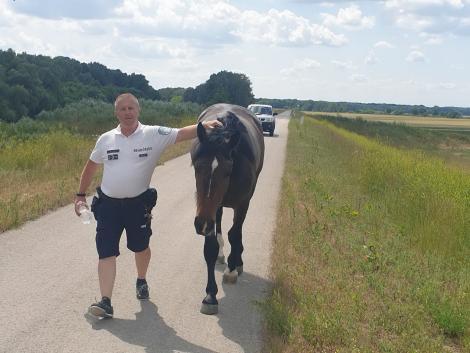 Kitikkadt, kóbor lovat talált egy rendőr – Képek