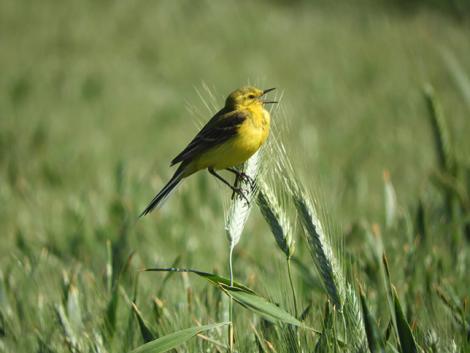 Nyáron nálad dalol a madár, télen pedig ínyencfalat Afrikában?