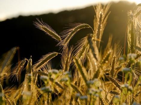 Mezőgazdasági krízisbiztosítás: közeleg az adatszolgáltatási határidő