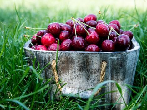 A német cseresznyetermelés az idén túlszárnyalta a tízéves átlagot