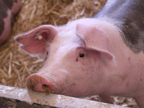 Nagy segítség az állatorvosoknak: elindult a Nébih LABOR rendszere