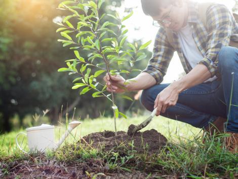 Pályázatok: Jó hírek az erdészetek számára