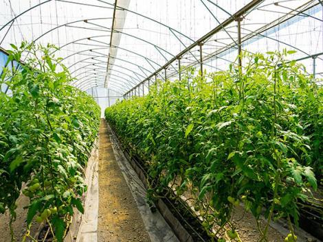 Modern növénytermesztés: a munka nehezét robot végzi