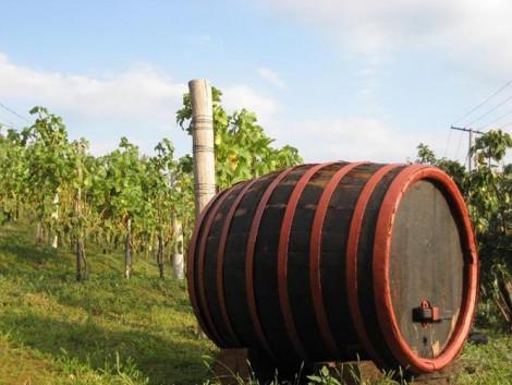 A somlói borokat méltán nevezhetjük gyógyboroknak